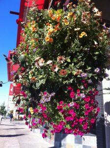 flowerbasket