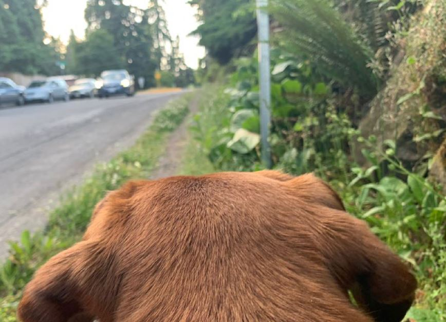 Paws on Patrol West Seattle Junction